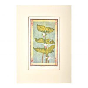 handmade color trillium etching print