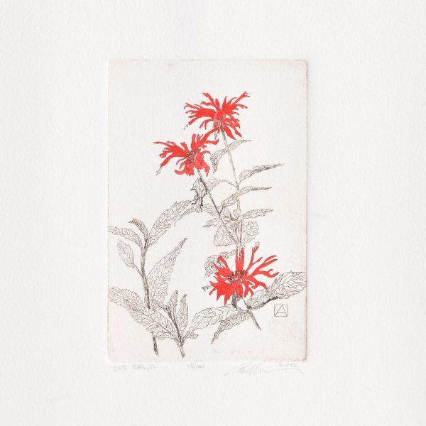 bee balm handmade etching