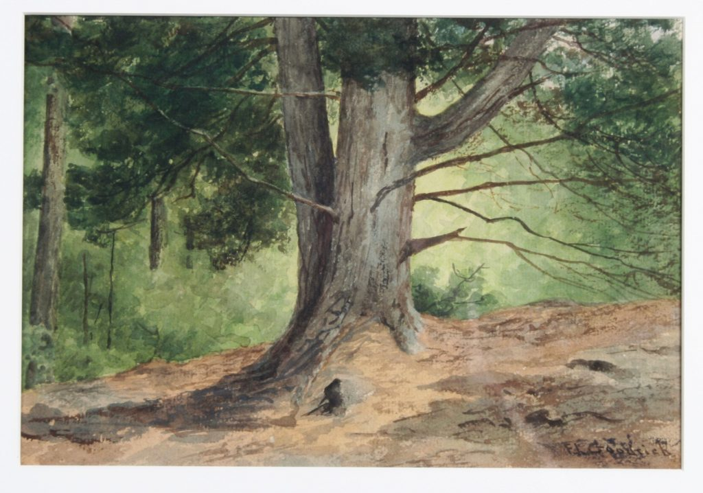Forest Scene, Frances Goodrich, c. 1895, watercolor.