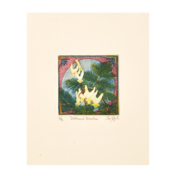 dutchman's breeches, mini colorful etching