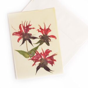 bee balm waxed notecard